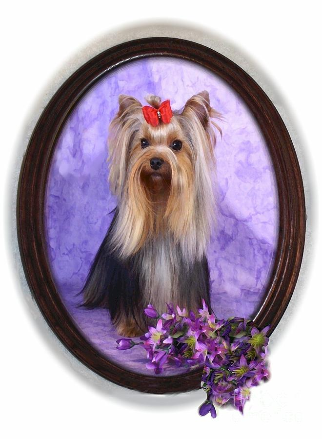 Yorkie With Violets Digital Art  - Yorkie With Violets Fine Art Print