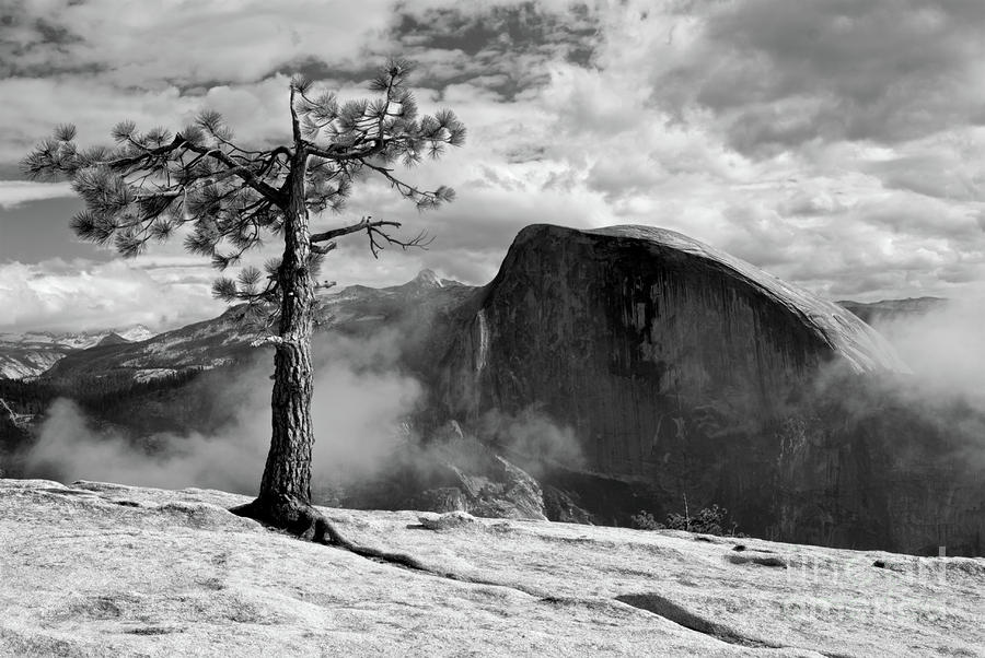 Yosemite Landscape Photograph