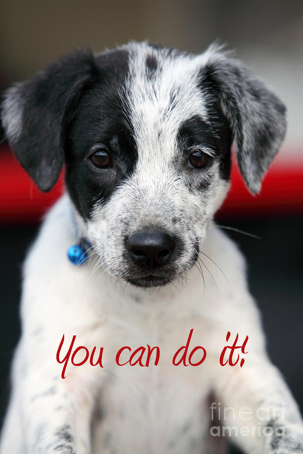 You Can Do It Photograph  - You Can Do It Fine Art Print