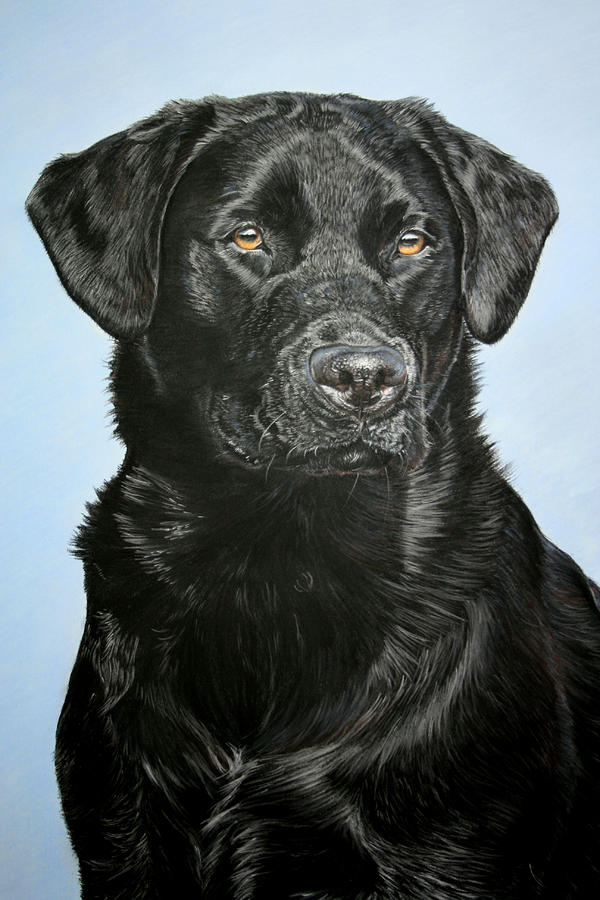 Young Black Labrador Pastel  - Young Black Labrador Fine Art Print