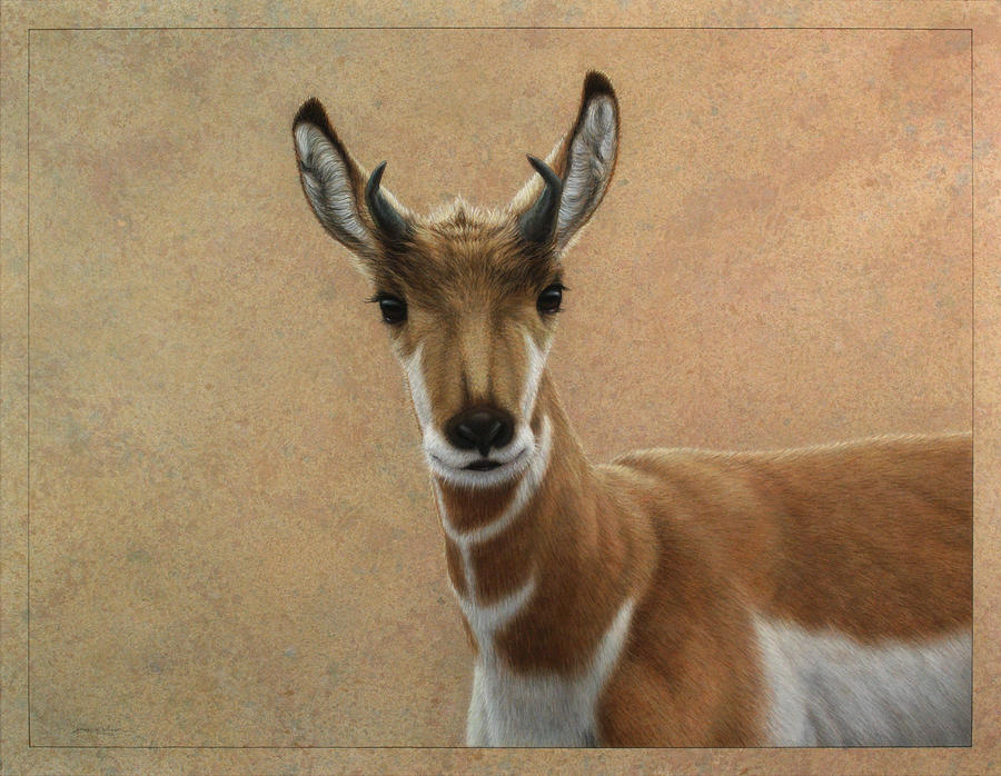 Young Pronghorn Painting  - Young Pronghorn Fine Art Print