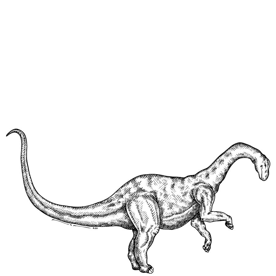 Yunnanosaurus Drawing