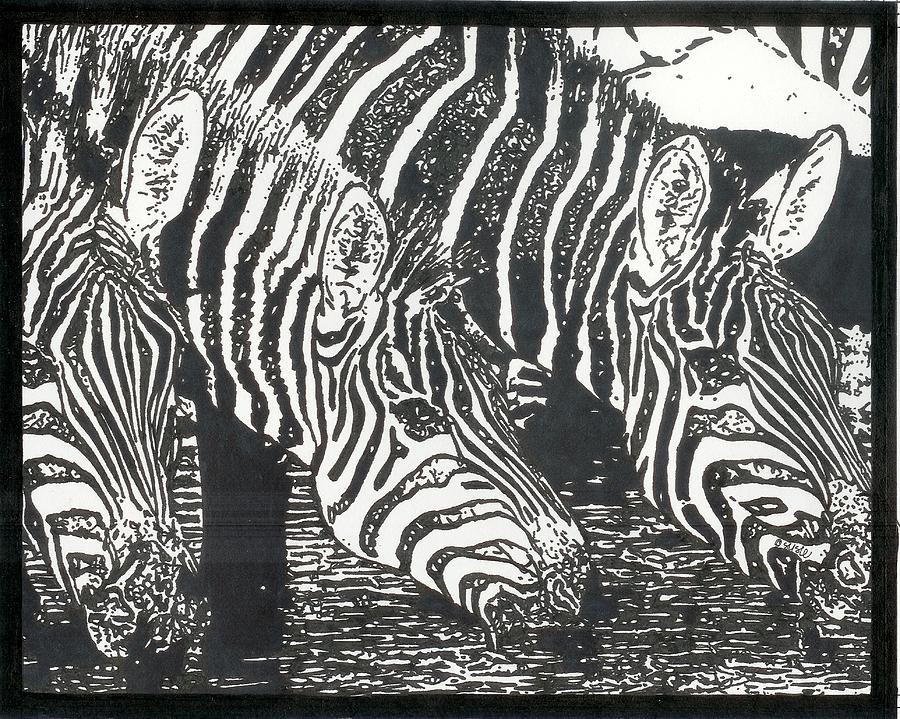 Zebra 2 Drawing  - Zebra 2 Fine Art Print