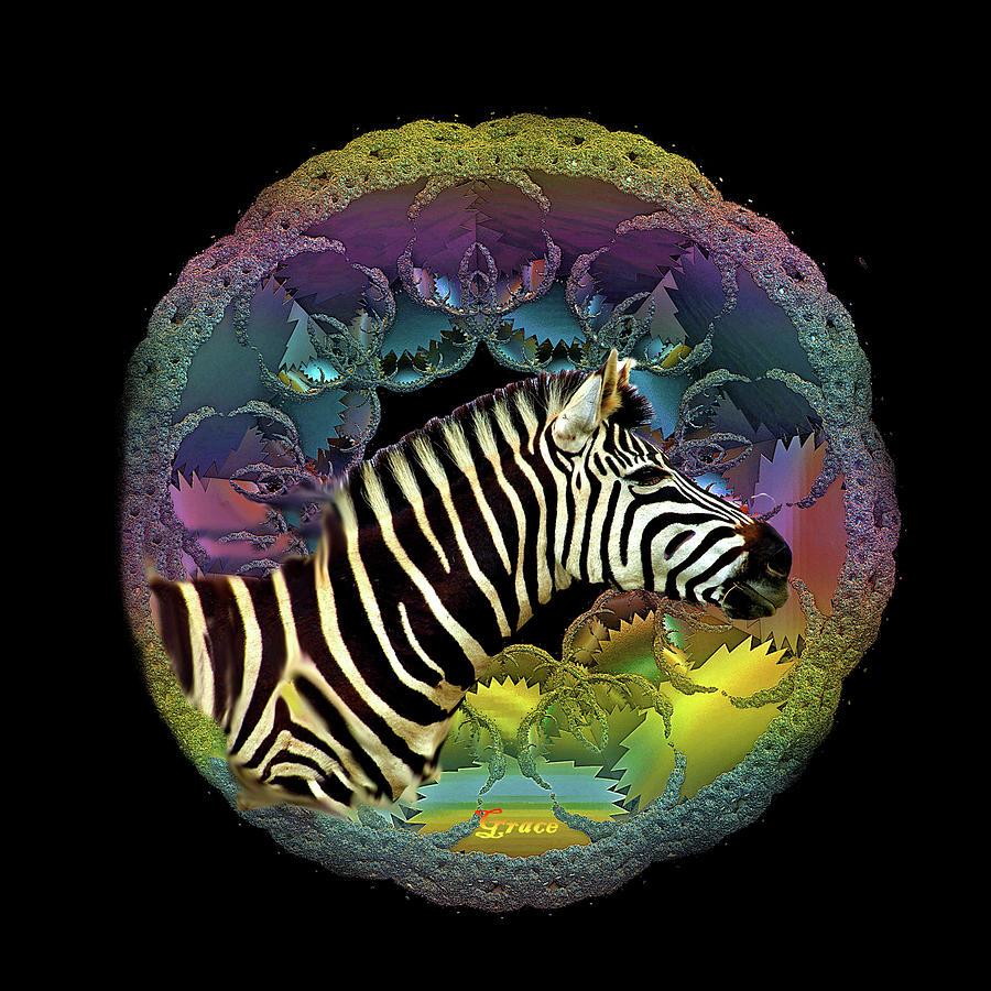 Zebra Photograph