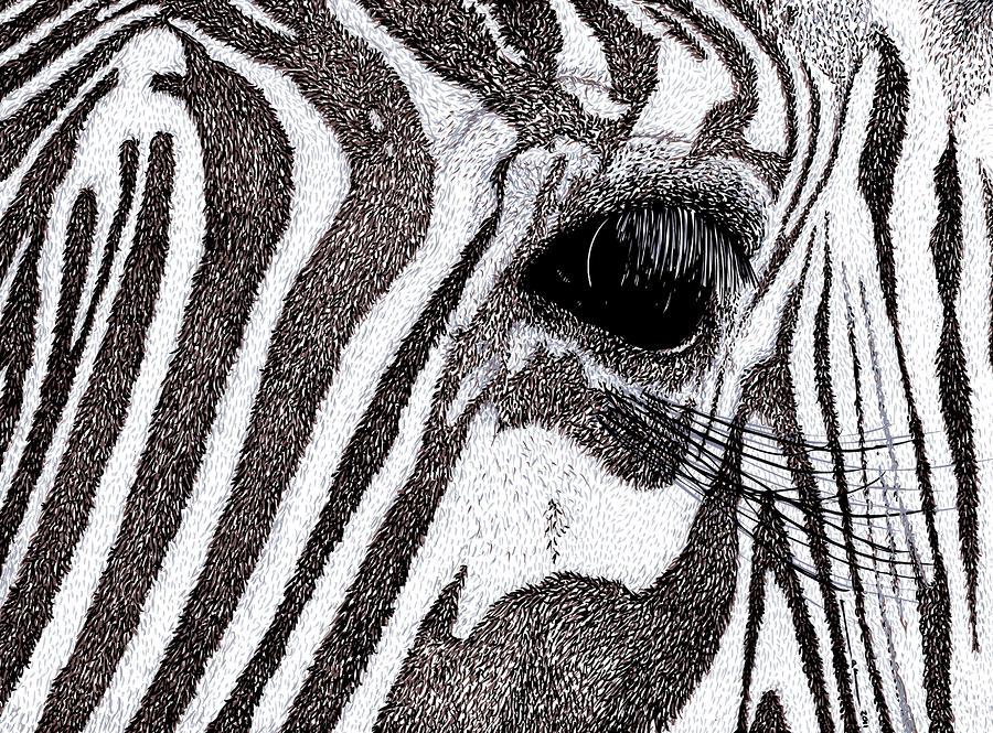 Zebra Portrait Drawing