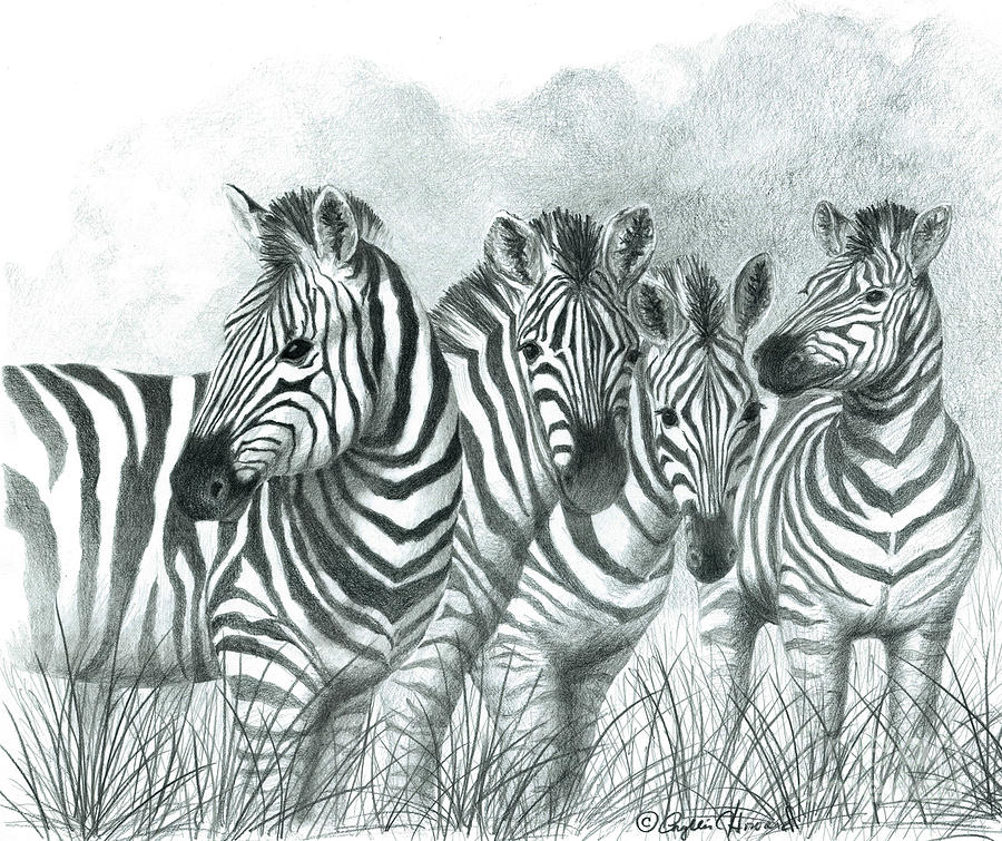 Zebra Quartet By Phyllis Howard