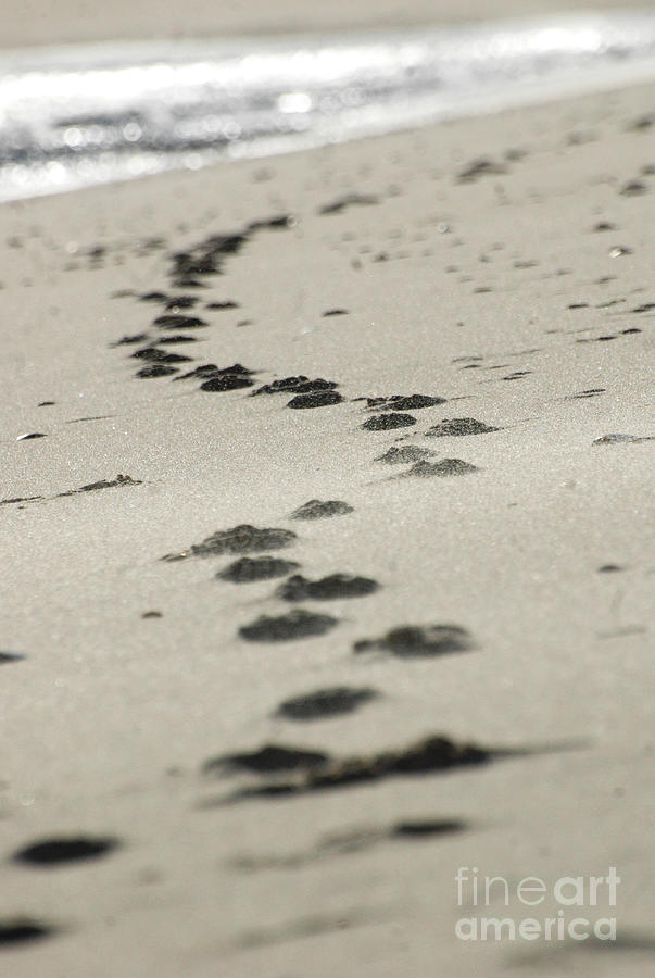 Zen Footsteps On The Snad Photograph  - Zen Footsteps On The Snad Fine Art Print