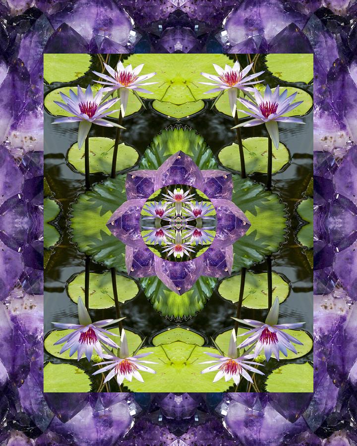 Zen Lilies Photograph