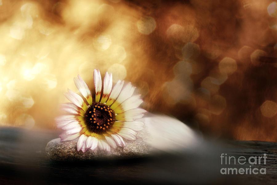 Zen Photograph - ZEN by VIAINA Visual Artist