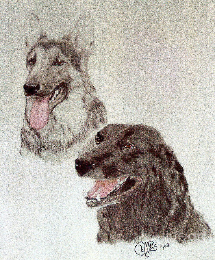 Zeus - German Shepherd And Bear - Black Labrador Retriever Drawing