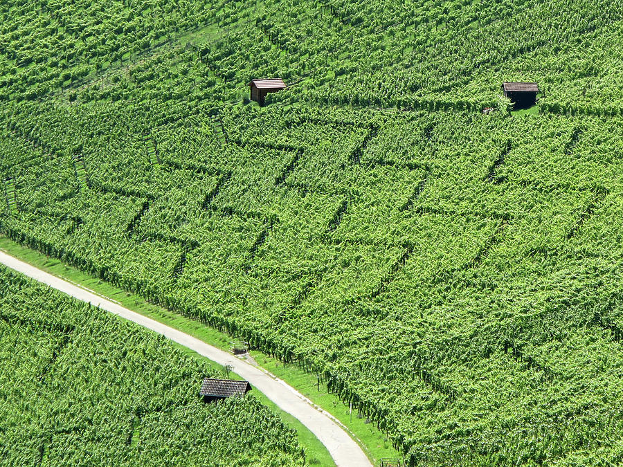 Zig-zag In Vineyards Photograph