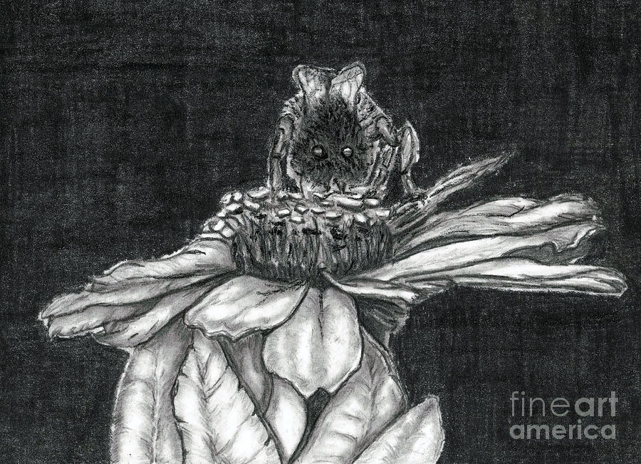 Zinnia Drawing  - Zinnia Fine Art Print