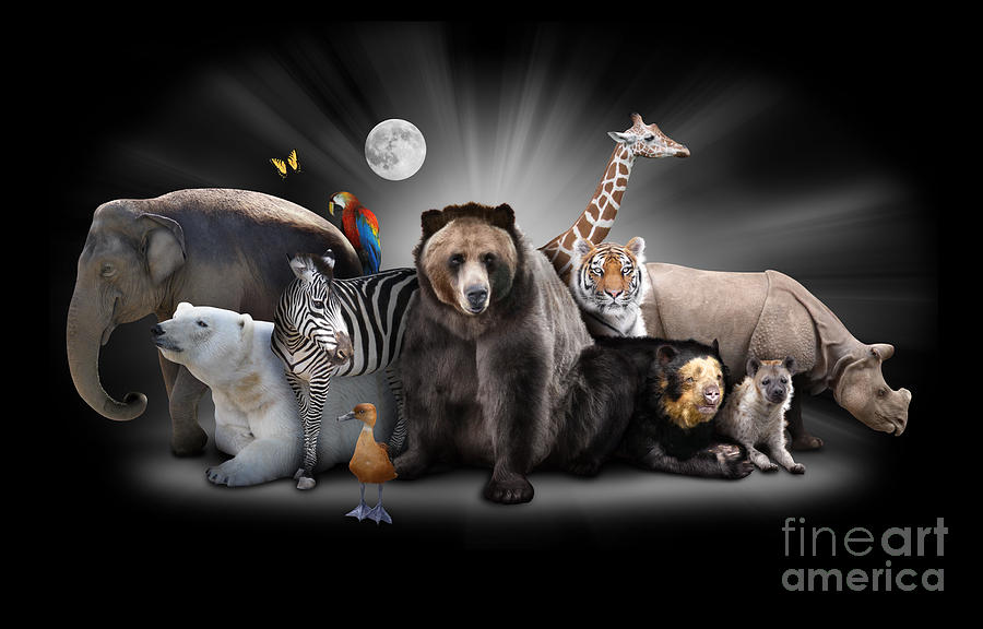 Zoo Animals At Night With Black Background Photograph