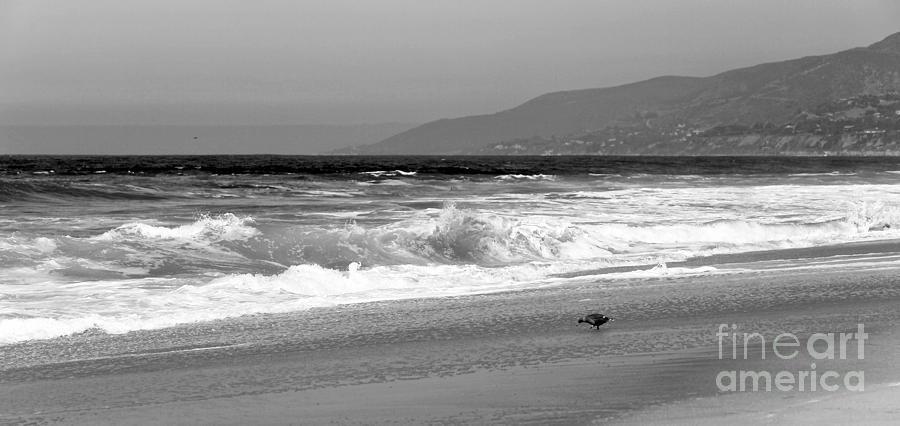 Zuma Beach Photograph - Zuma Beach by John Rizzuto