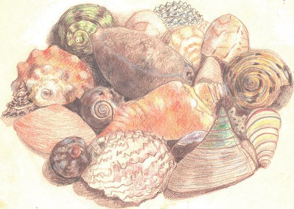 Trudy Brodkin Storace -              Sea Forms