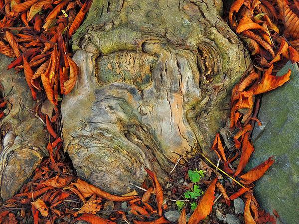 Marcia Lee Jones -  A Tree Knot