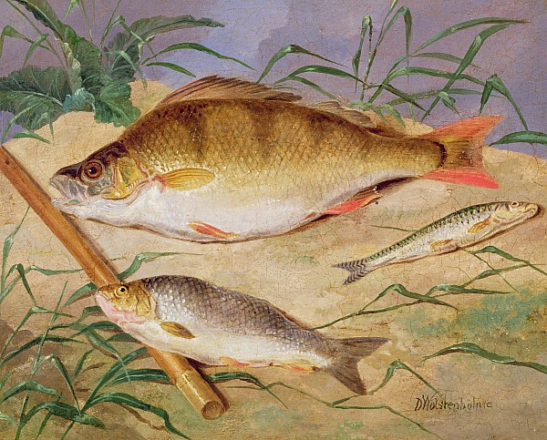 An Angler's Catch Of Coarse Fish Print by D Wolstenholme