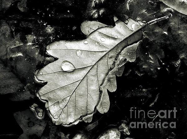 Leaf Print by Odon Czintos