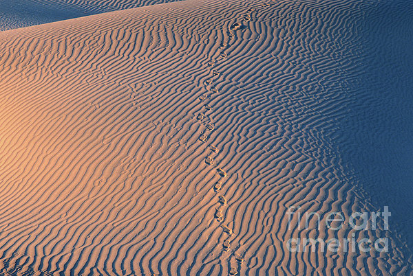 Tracks At First Light In Death Valley Print by Sandra Bronstein