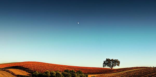Vineyard Sky Panorama Print by Larry Gerbrandt