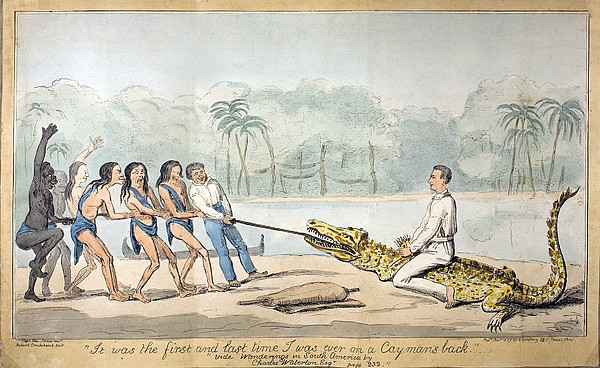 1826 Naturalist Charles Waterton & Caiman Print by Paul D Stewart