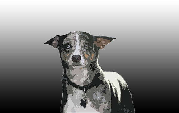Australian Cattle Dog Sheltie Mix Print by One Rude Dawg Orcutt