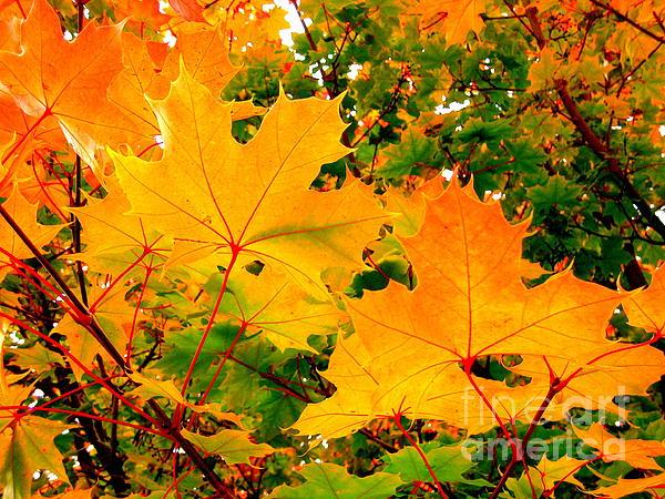 Kathy Bassett - Autumn in British Columbia