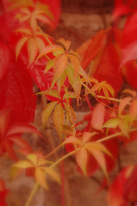 Autumn Leaves Print by Eva Ason