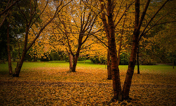 Autumn Print by Micael  Carlsson