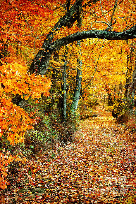 Autumn Pathway Print by Cheryl Davis