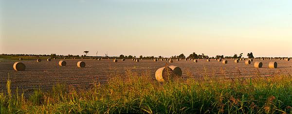 Bales In Peanut Field 2 Print by Douglas Barnett