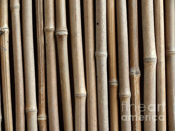 Bamboo Fence Print by Yali Shi