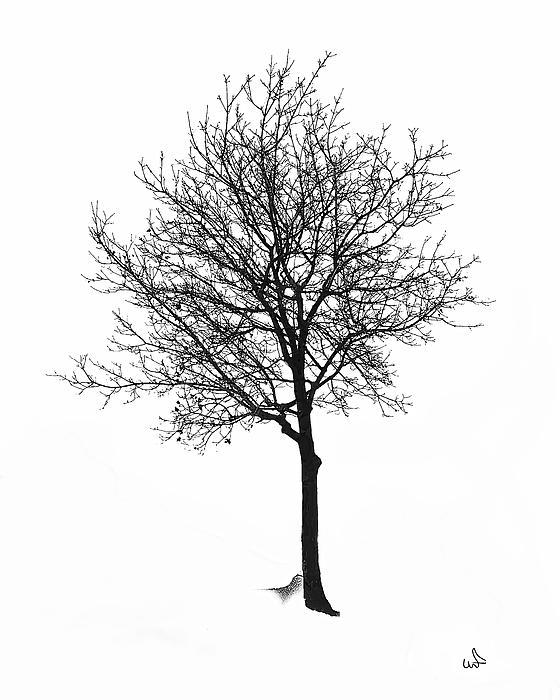 Bare Winter Tree Print by Michael Flood