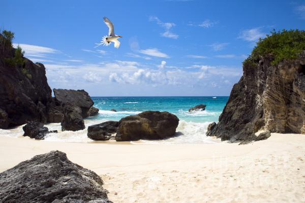 John Greim - Beach Bird