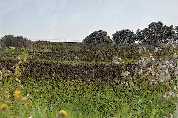 Beautiful California Vineyard Framed With Flowers Print by Brandon Bourdages