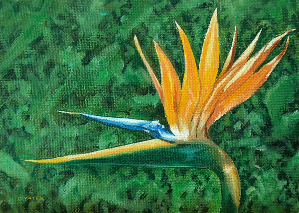 Bird Of Paradise Print by Charles Yates