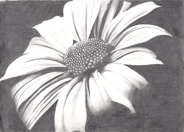 Black And White Flower Print by Amanda Rhone