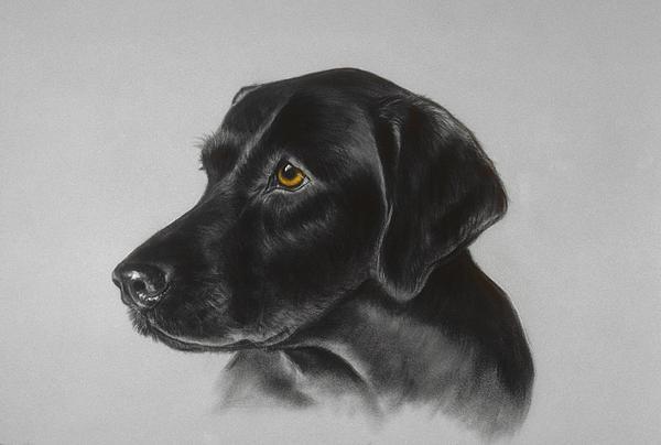 Black Labrador Print by Patricia Ivy
