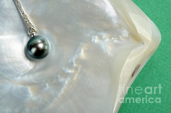 Black Pearl Necklace On Oyster Shell Print by Sami Sarkis