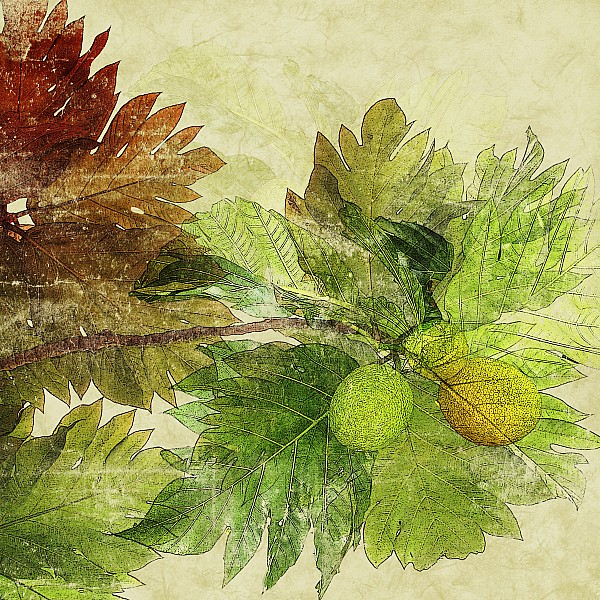 Breadfruit Print by Kaypee Soh - Printscapes