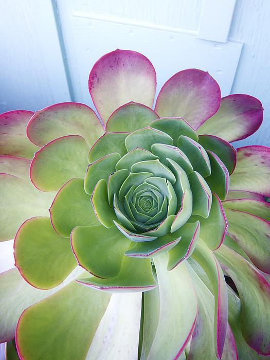 Cactus Print by Patricia Granlund