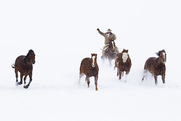 Cowboys And Horses In Winter Print by Frank Lukasseck