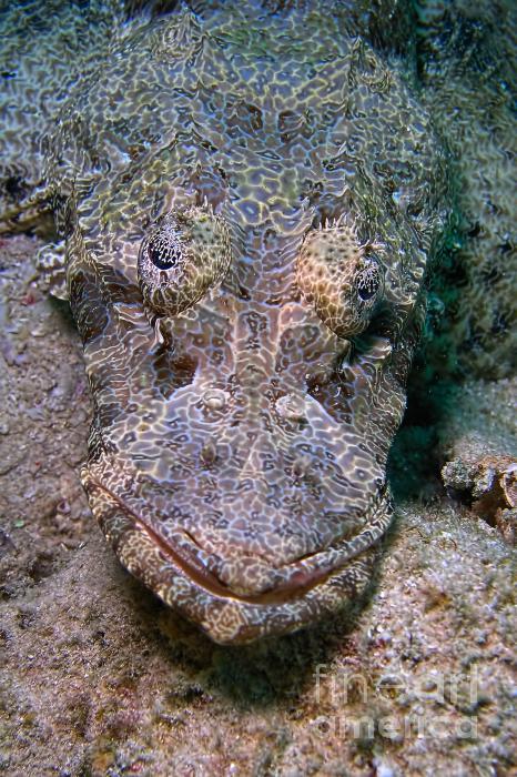 Crocodile Fish Print by Joerg Lingnau