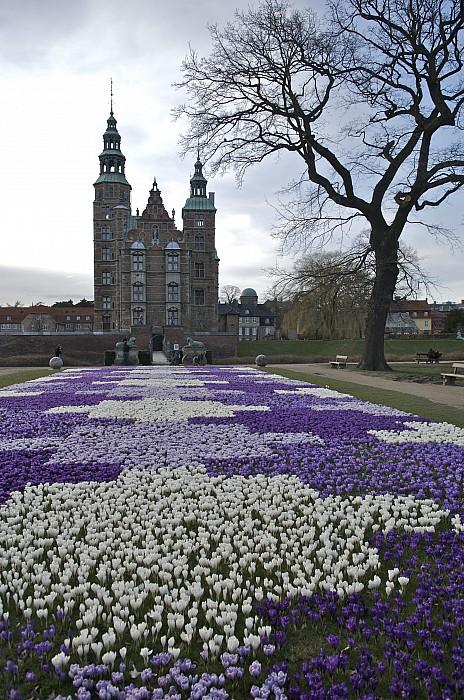 Denmark, Copenhagen Crocus Bloom Print by Keenpress