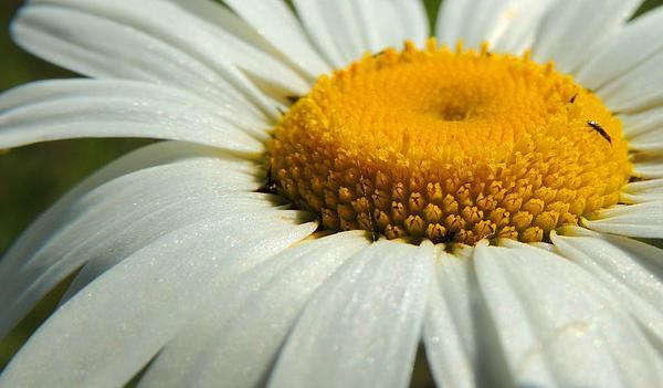 Gary Harris - Disc Floret