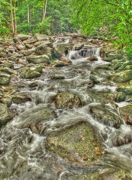Myrna Bradshaw - Downhill Rush
