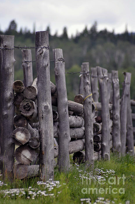 Fenced In Print by Juls Adams