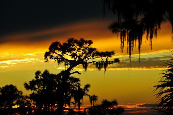 Florida Sunset Print by David Lee Thompson