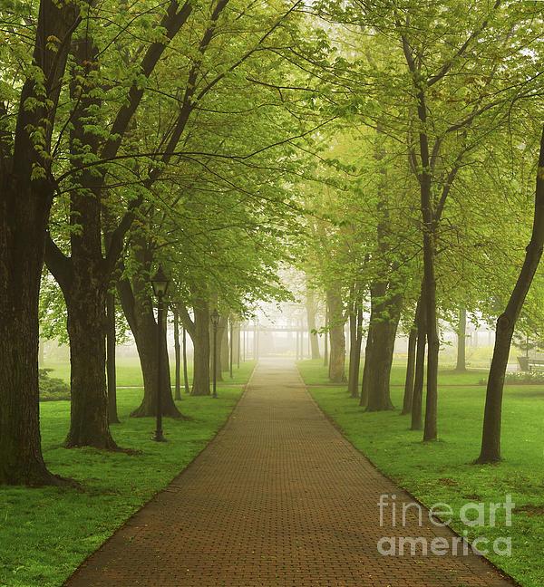 Foggy Park Print by Elena Elisseeva