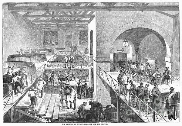 France: Wine Harvest, 1871 Print by Granger